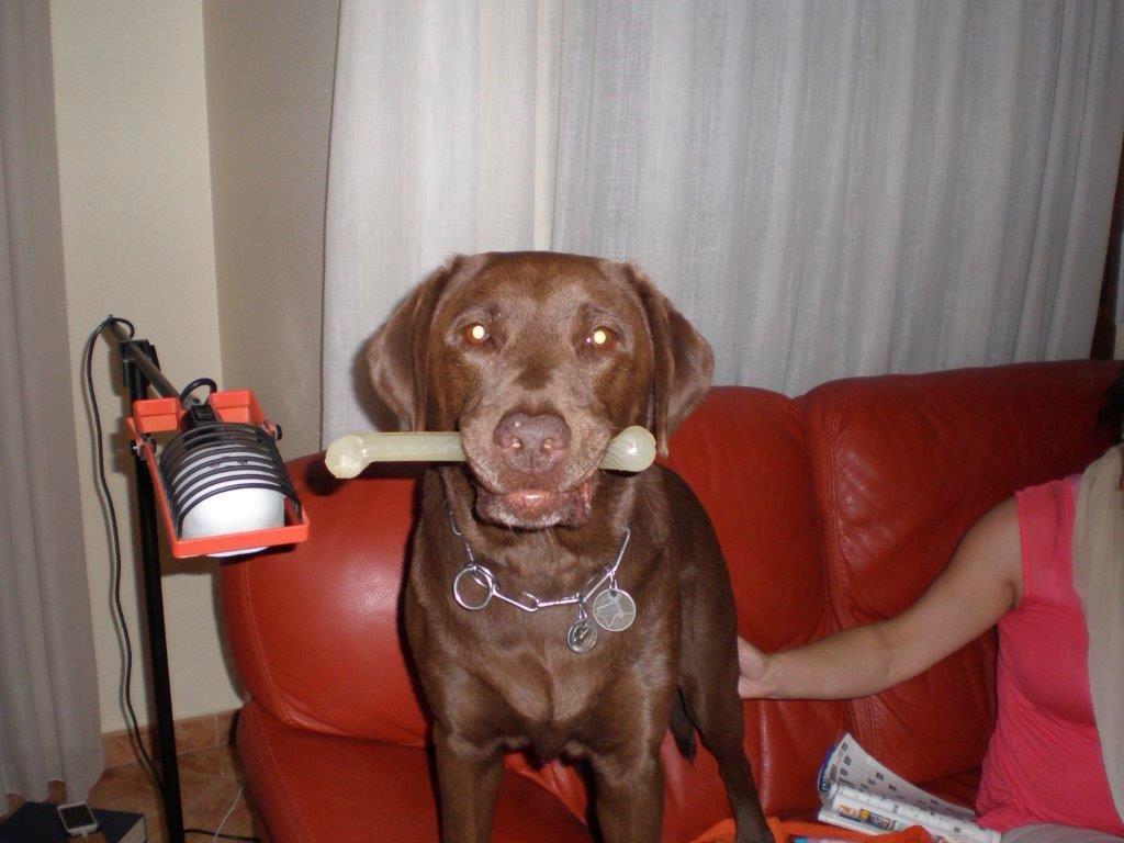 perro-relato2