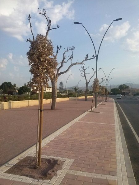 """IU-V alerta que """"se están secando"""" los árboles recién plantados en la rambla de Tiata"""