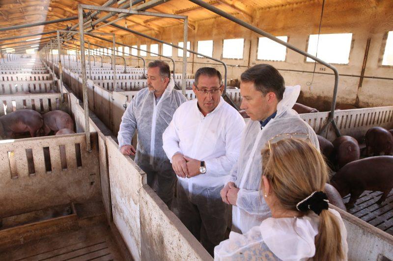 """Gil anticipa que llevará al próximo pleno una moción """"en defensa del sector ganadero"""""""