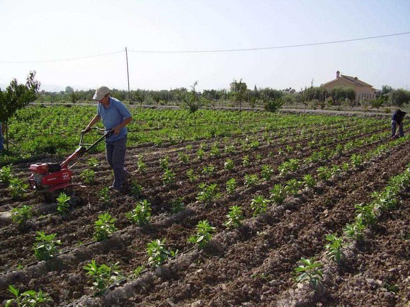 Piden apostar por alimentos ecológicos en los comedores escolares y hospitales de la Región